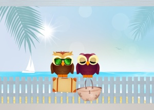 owls couple on summer holidays